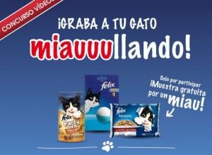 muestras-gratis-purina-comida-gatos-felix