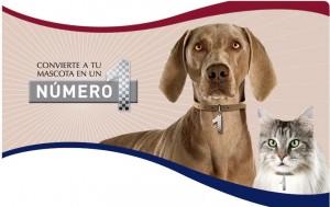 Medallas gratis para mascotas
